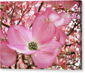 Dogwood Tree 1 Pink Dogwood Flowers Artwork Art Prints Canvas Framed Cards Canvas Print by Baslee Troutman