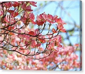 Dogwood Tree Landscape Pink Dogwood Flowers Art Canvas Print by Baslee Troutman