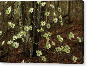 Canvas Print featuring the photograph Dogwoods In The Spring by Mike Eingle
