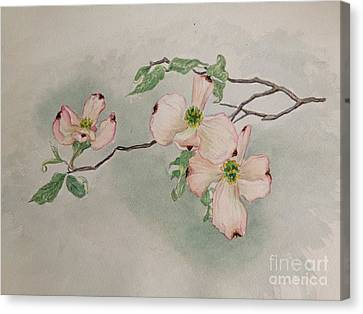 Dogwoods Canvas Print by Janet Felts