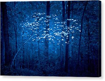 Canvas Print featuring the photograph Dogwoods Of Texas by Linda Unger