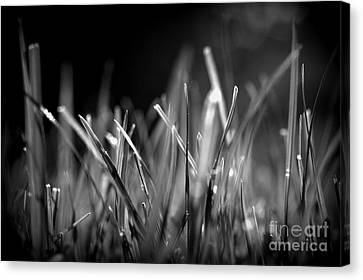 Real Experiences Canvas Print - Doing Glow by Steven Macanka