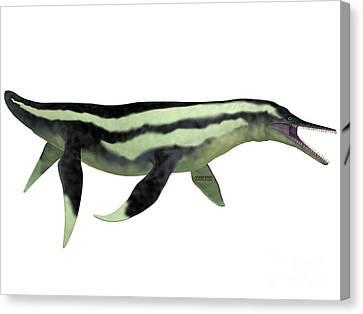 Dolichorhynchops Plesiosaur On White Canvas Print by Corey Ford