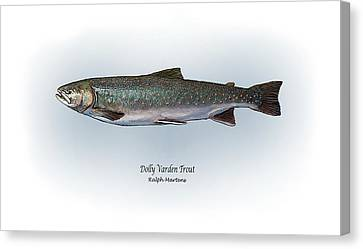 Dolly Varden Trout Canvas Print by Ralph Martens