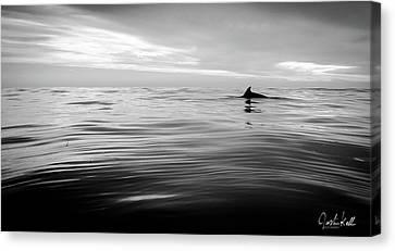 Dolphin Fin Canvas Print