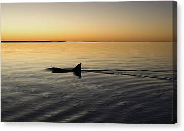 Dolphin Canvas Print by Gary Wright