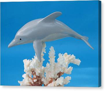 Dolphin On Coral Canvas Print by Jack Murphy