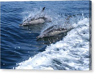 Dolphin Surfing Fantasy Canvas Print by Don Kreuter