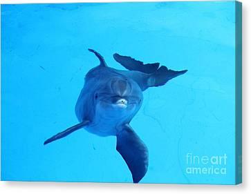 Dolphin Underwater Canvas Print