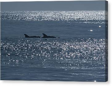 Dolphins And Reflections Canvas Print by Allan Levin