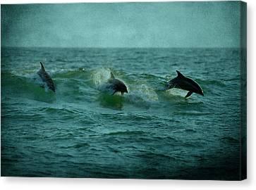 Panama City Beach Canvas Print - Dolphins by Sandy Keeton