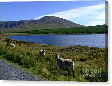 Donegal Landscape Canvas Print