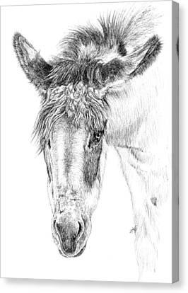 Canvas Print - Donkey 1 by Keran Sunaski Gilmore