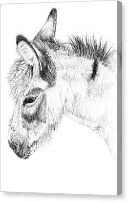 Donkey 2 Canvas Print by Keran Sunaski Gilmore