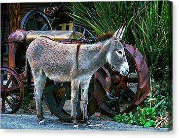 Donkey And Old Tractor Canvas Print by Garry Gay