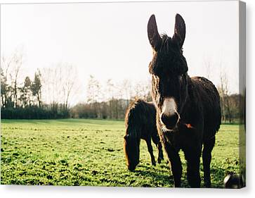 Donkey And Pony Canvas Print