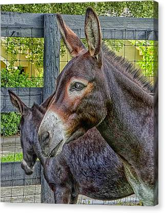 Donkey Canvas Print by Dennis Dugan