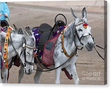 Donkeys On Blackpool Beach Canvas Print