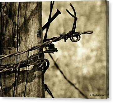 Don't Fence Me In 2 Canvas Print by Betty Northcutt