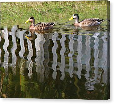Don't Fence Us In Canvas Print by Kathy M Krause