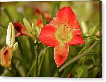 Don't Forget Me Lily Canvas Print