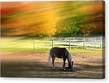 It's Where You Find It Canvas Print by Diana Angstadt