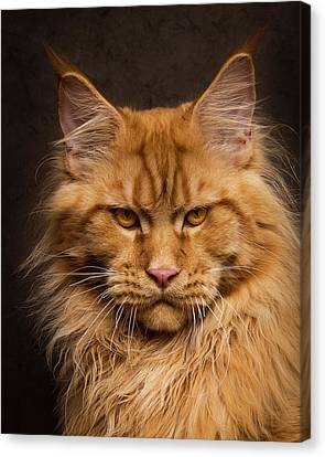 Canvas Print featuring the photograph Don't Mess With Me. by Robert Sijka