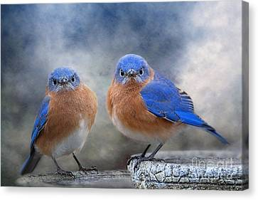 Don't Ruffle My Feathers Canvas Print by Bonnie Barry