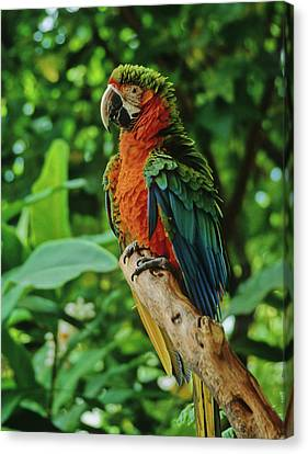 Canvas Print featuring the photograph Don't Ruffle My Feathers by Marie Hicks