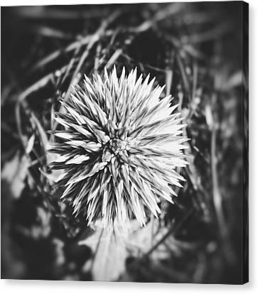 Canvas Print featuring the photograph Don't Touch Me by Karen Stahlros