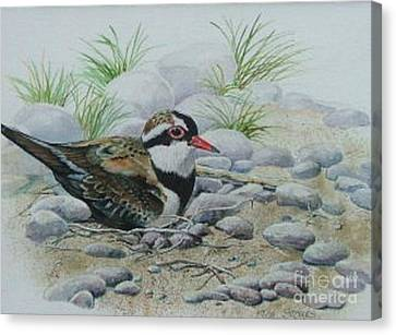 Dotterol Canvas Print by Val Stokes