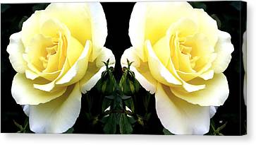 Canvas Print - Double Cream Roses by Will Borden