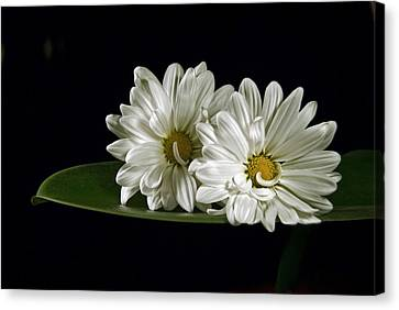Canvas Print featuring the photograph Double Delight by Elsa Marie Santoro