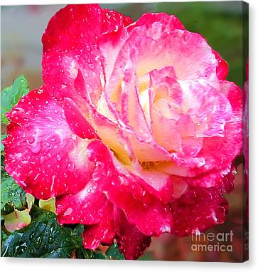Canvas Print featuring the photograph Double Delight by Patricia Griffin Brett