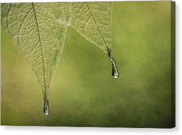 Double Drip Canvas Print by Maggie Terlecki
