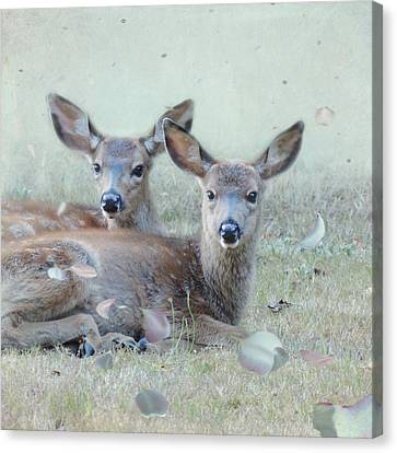 Canvas Print featuring the photograph Double Gaze by Sally Banfill
