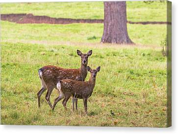 Canvas Print featuring the photograph Double Take by Scott Carruthers