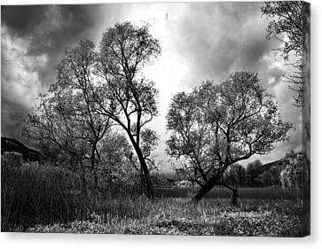 Double Tree Canvas Print