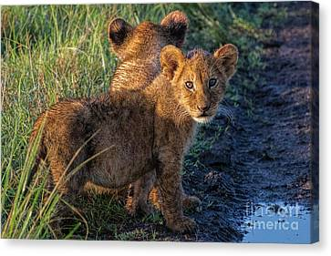 Canvas Print featuring the photograph Double Trouble by Karen Lewis
