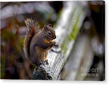 Douglas Squirrel On A Log Canvas Print by Sharon Talson