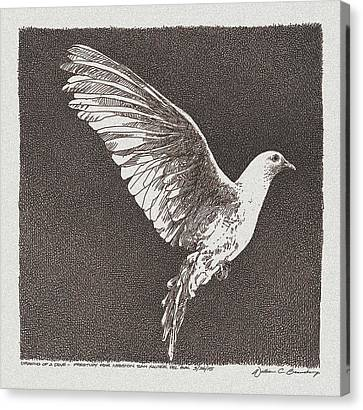 Dove Drawing Canvas Print by William Beauchamp