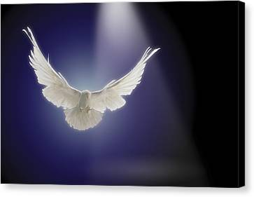 Dove Flying Through Beam Of Light Canvas Print by Comstock Images