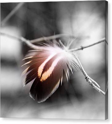 Dove Tail Canvas Print by Russell Styles