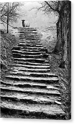 Dovedale Steps Canvas Print by John Edwards