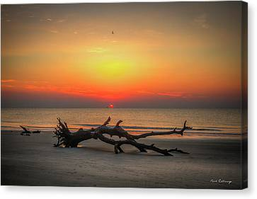 Down But Not Out Driftwood Beach Jekyll Island Georgia Art Canvas Print by Reid Callaway