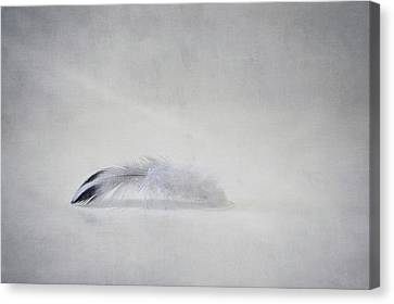 Down Feather Canvas Print by Scott Norris