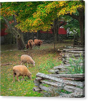 Farms Canvas Print - Down On The Farm Square 2015 by Bill Wakeley