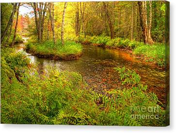 Canvas Print featuring the photograph Downeast Fall Stream by Alana Ranney