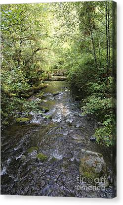 Downstream Canvas Print by Carol Groenen