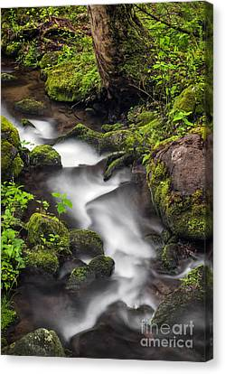 Downstream From The Waterfalls Canvas Print by Madonna Martin